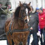 hest_luke 16